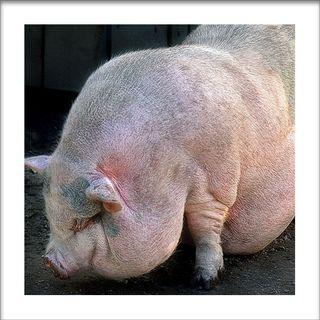 Euro_farm_animal