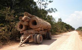 Amazon-wood-truck