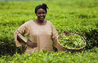 Irene+Kijara+Tea+Farmer+Uganda+copyright+Simon+Rawles