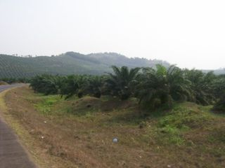 Palm-plantations-near-mount-cameroon