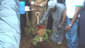 Hon. Cavaye waters tree