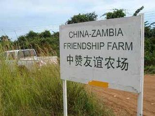 China_ZambiaFriendshipFarmCrop