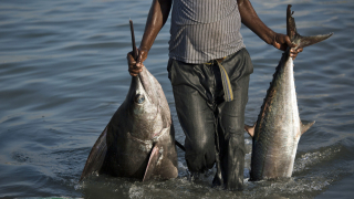 African fishing