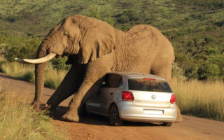 Elephantcar