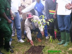 Ngolle_ngolle_plants_tree